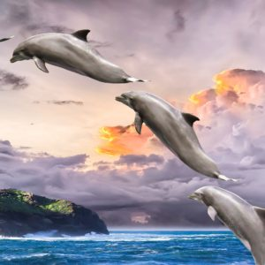 dolphin-1548405-kopia